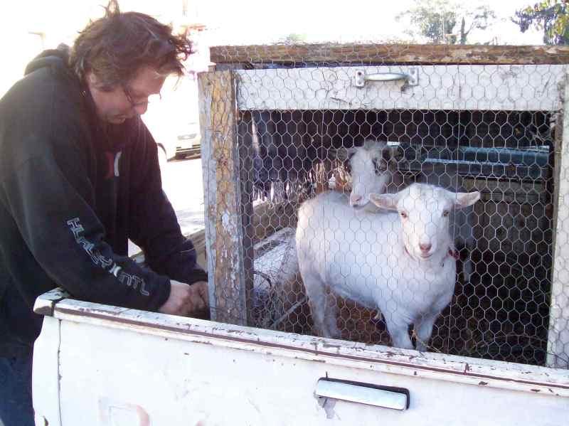 goatloader