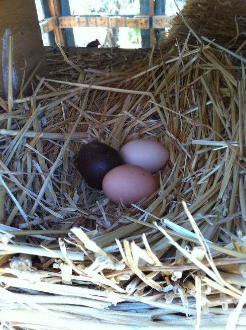 eggphoto