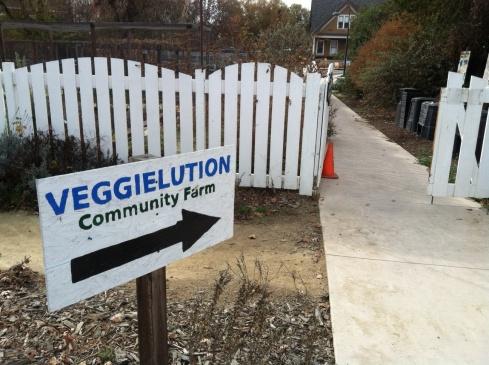 veggielution